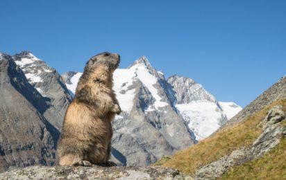 Groundhog Unit Hire -